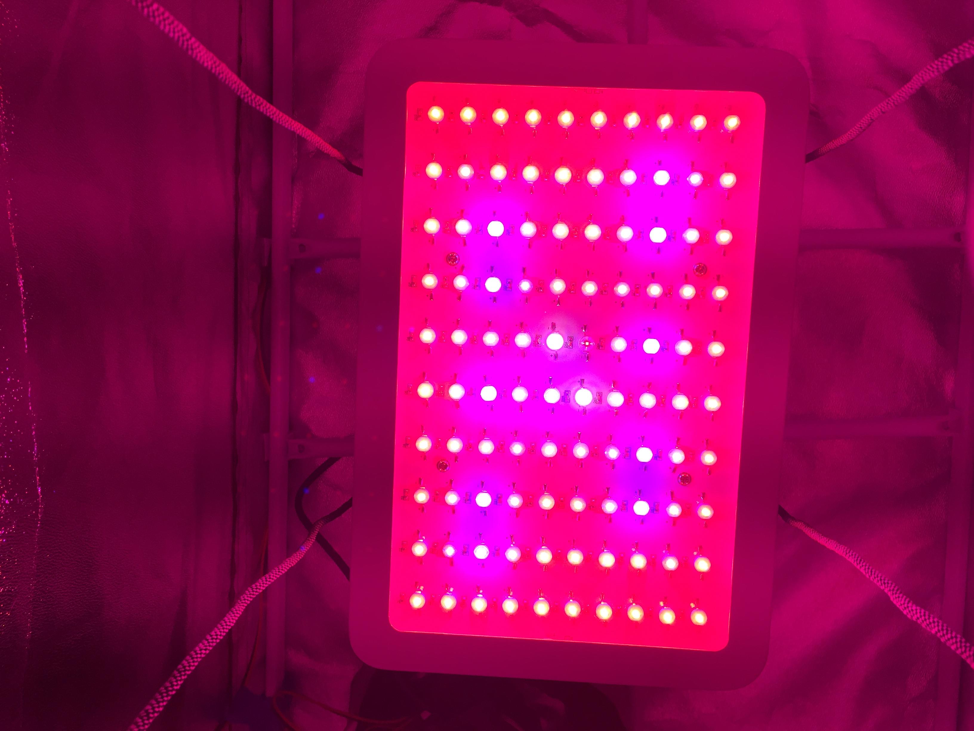 view 2 of grow light